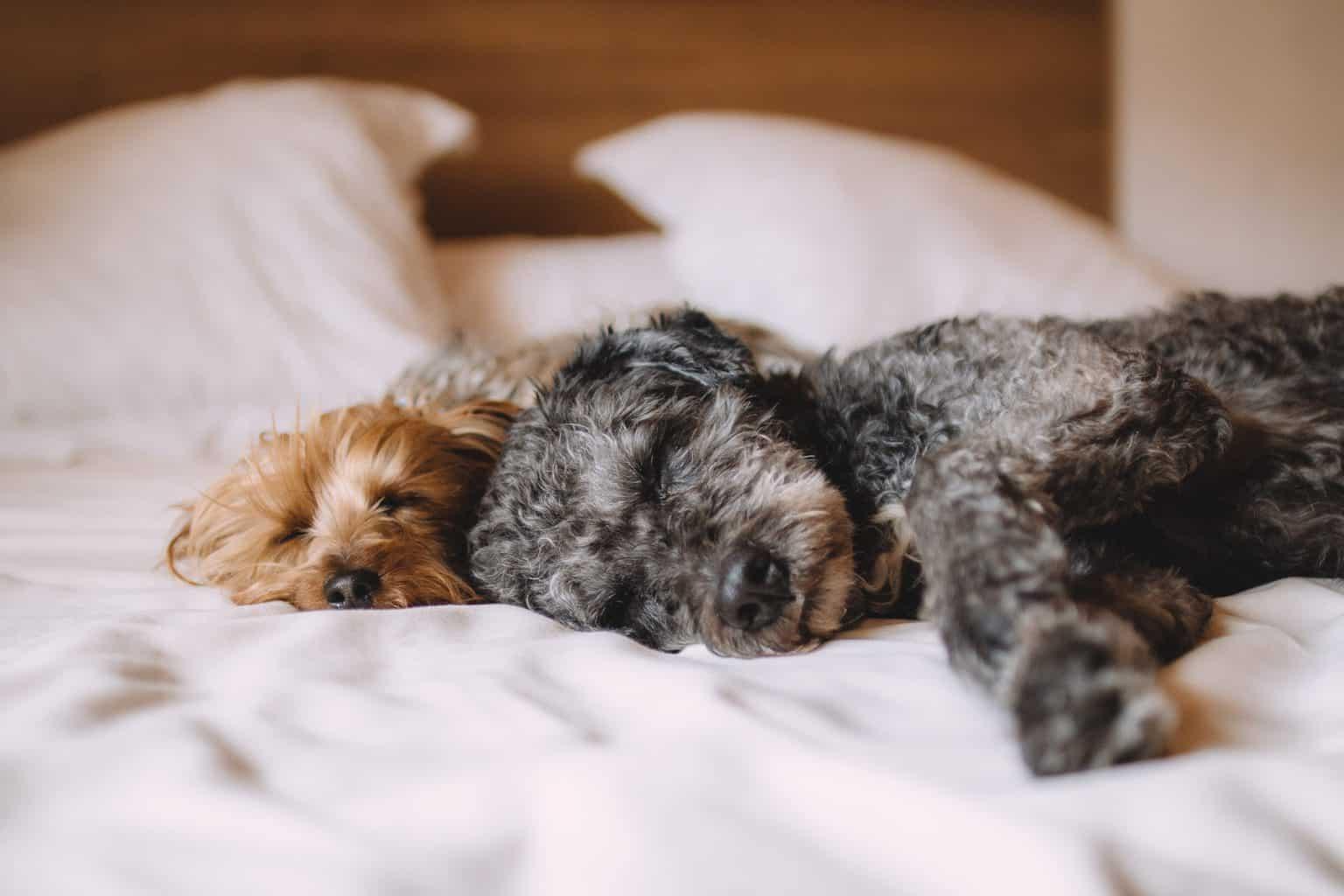 Micro-Habits to Reduce Stress: Get Quality Sleep